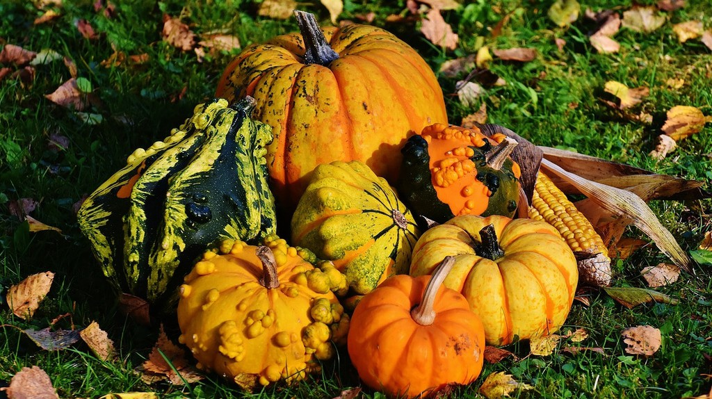 Pumpkins | © Alexas_Fotos/Pixabay