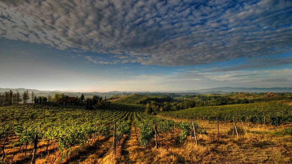 An Italian vineyard   © Francesco Sgroi/Flickr