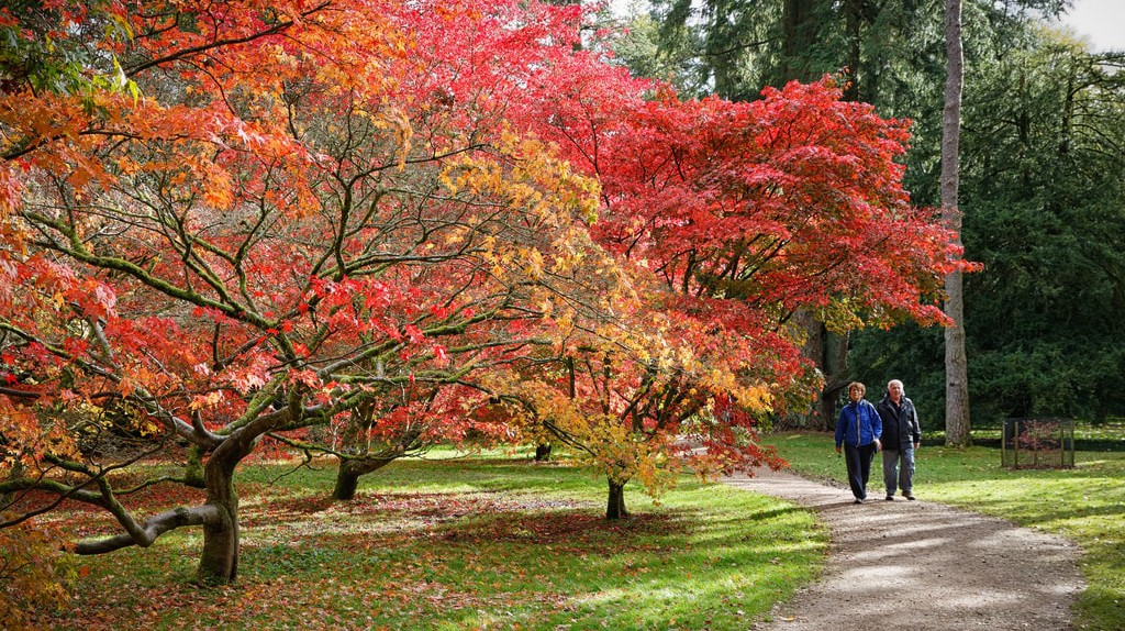 Under the acer trees | © Alistair Campbell/Flickr