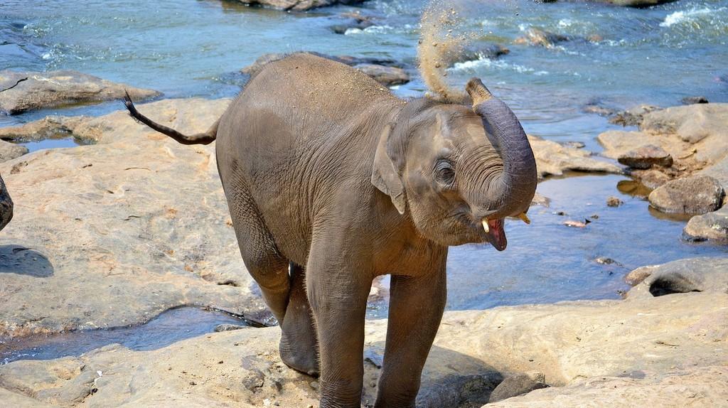 Baby Elephant | ©  Nurzee/Pixabay