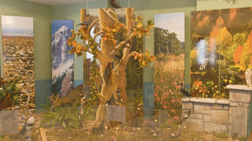 Helmi's Natural History Museum