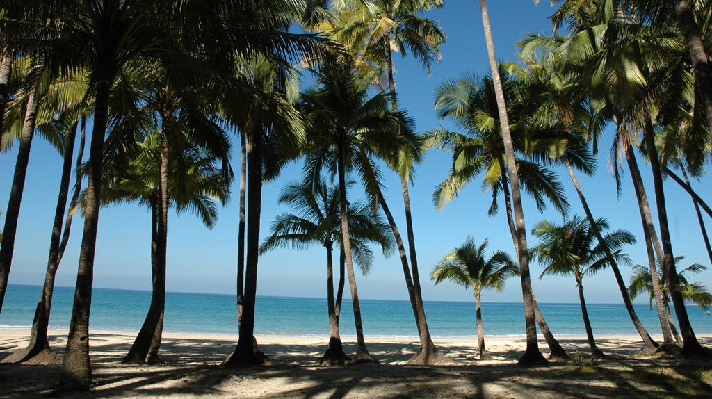 Palm trees line Ngapali Beach, Myanmar | © Tamlyn Rhodes / Free Images