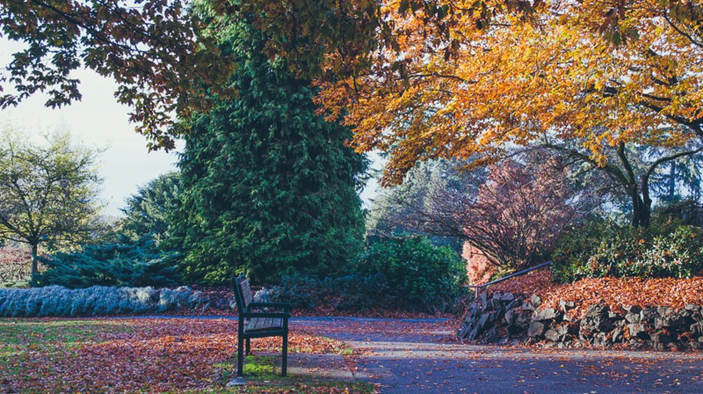 Fall in Queen Elizabeth Park | © Hayley Simpson