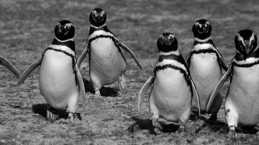 The Best Places to See Penguins in Chile