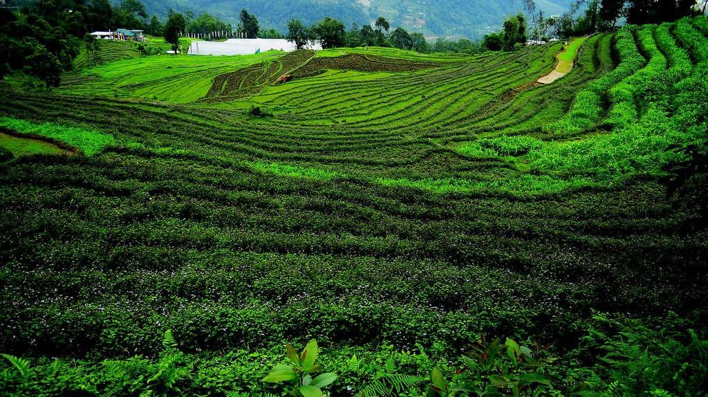 Terrace farming in Sikkim   © soumyajit pramanick / Flickr