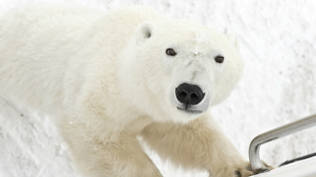 The Best Wildlife Experiences in Canada