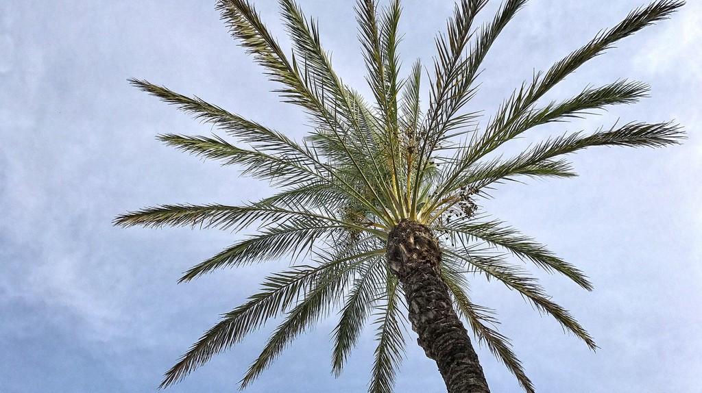Palm trees in Monaco   © Mediengestalter/Pixabay
