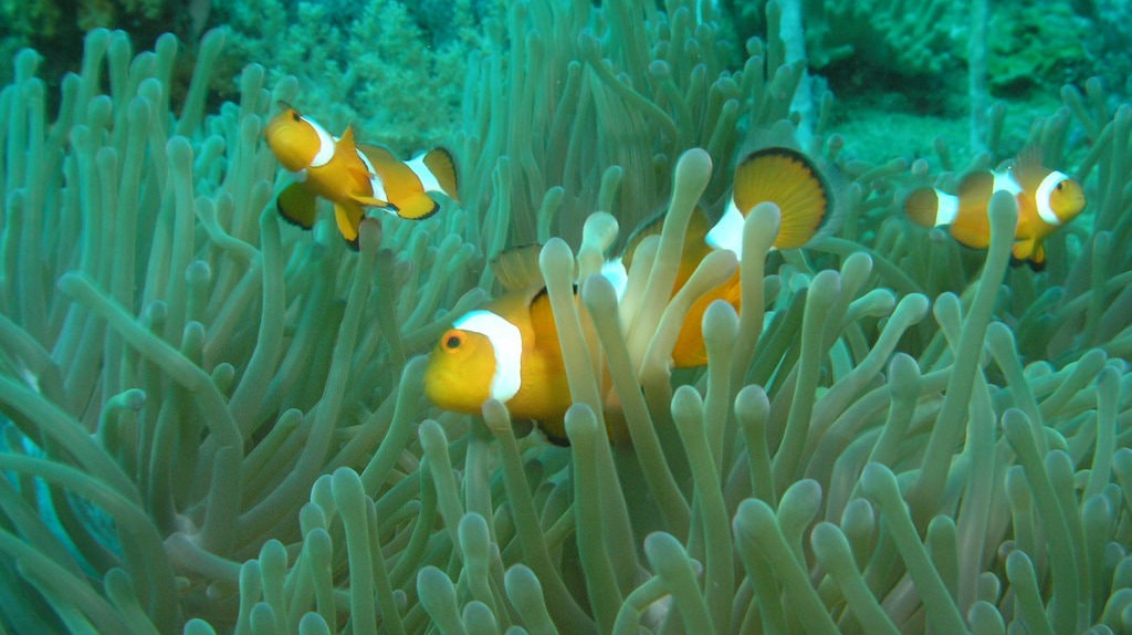 Nemo? | © travellingrunes/Flickr