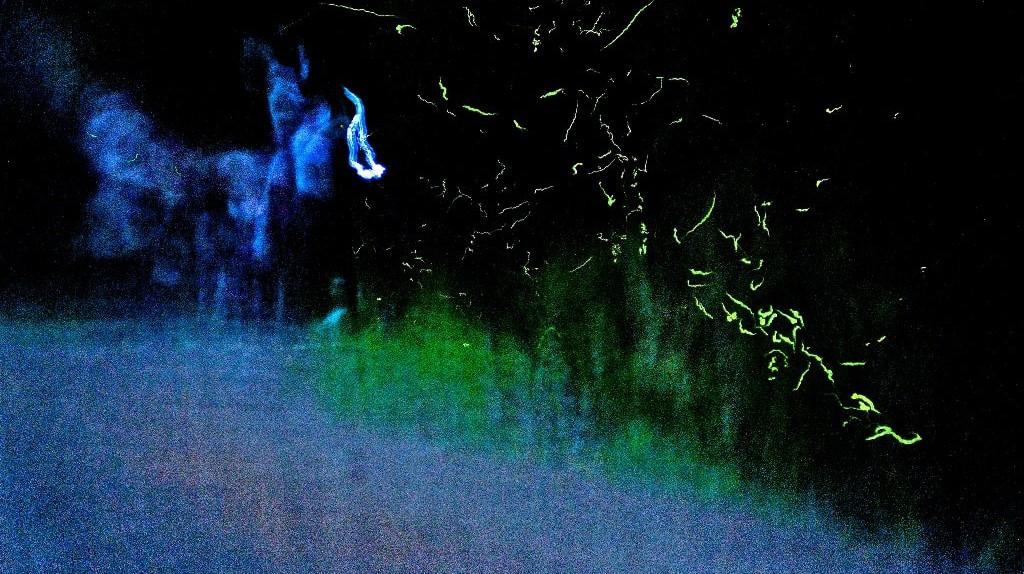 Fireflies Lighting Up the Sky | © Hide / Flickr