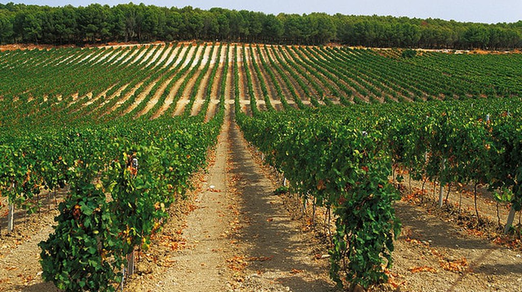 Where to Find The Most Luscious Vineyards in Sicily, Italy