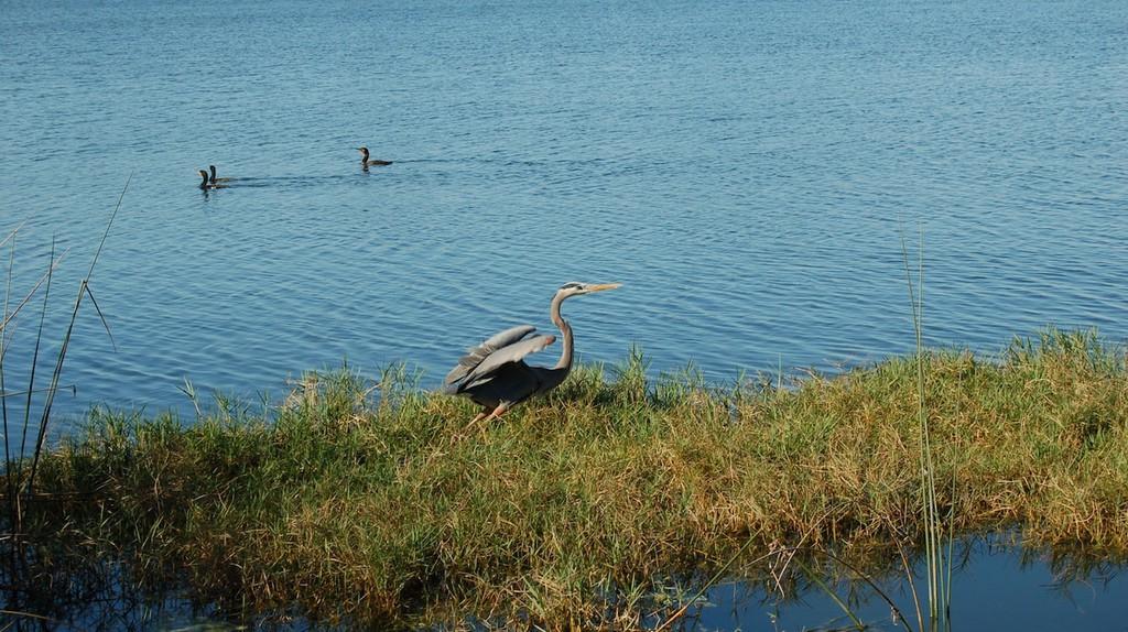 Go fishing in Lake Ivanhoe, Orlando | © Tricia / Flickr