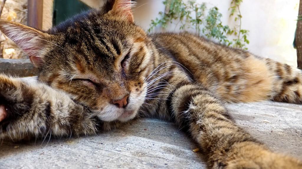 Doće maca na vratanca   © Breckles/Flickr