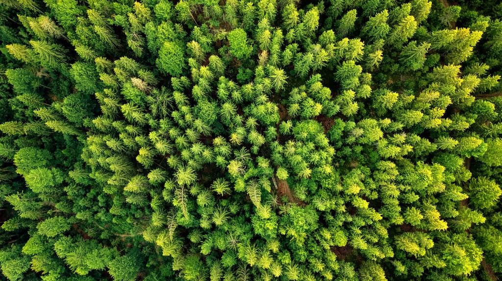 A new perspective of an old forest | © ZullU InFocus/Shutterstock