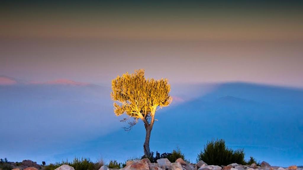 Tree atop the Gorakh Hills