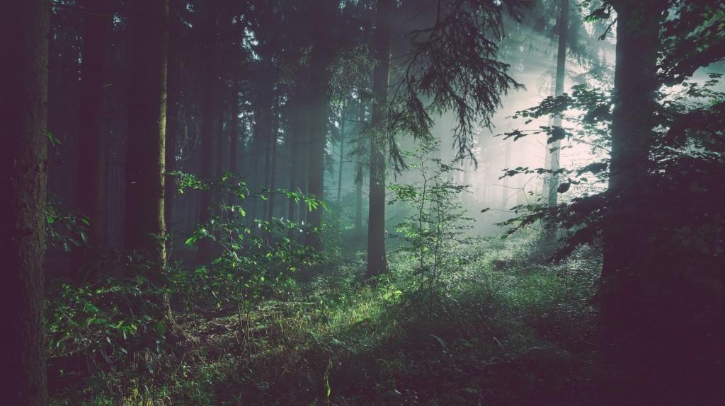 Mist in the forest   © Sebastian Unrau/Unsplash