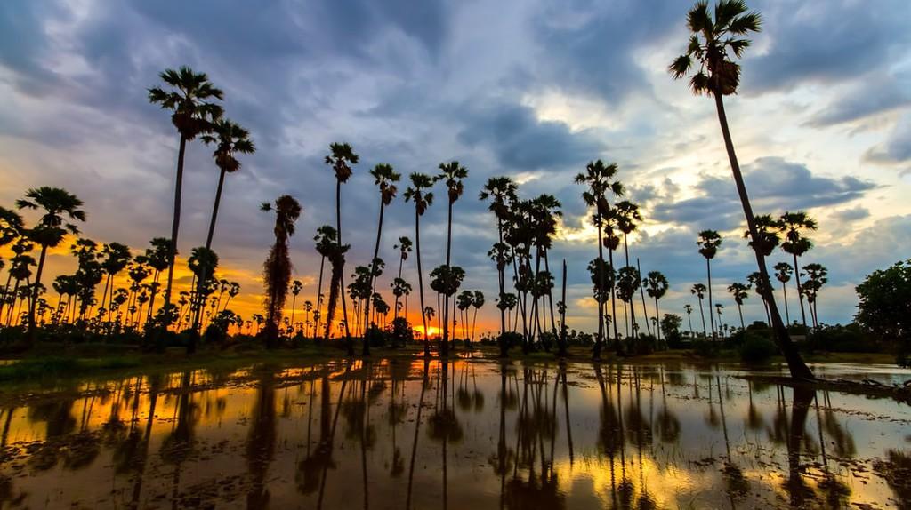 A typical rural Cambodian scene © nattanan726/ Shutterstock.com