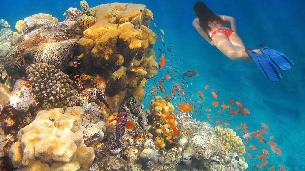 A girl swims underwater amid the beautiful coral and colourful tropical fish in the Red Sea, Eilat, Israel | © irisphoto1 / Shutterstock