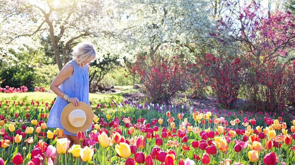 A Woman Wanders Through a Field of Tulips   © jill111 / Pixabay