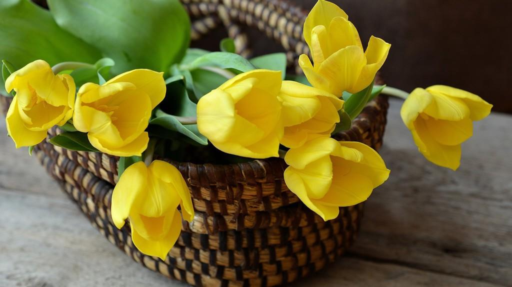 Tulips   © pixabay