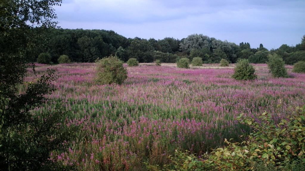 Chorlton meadows | © chiptooth / Flickr