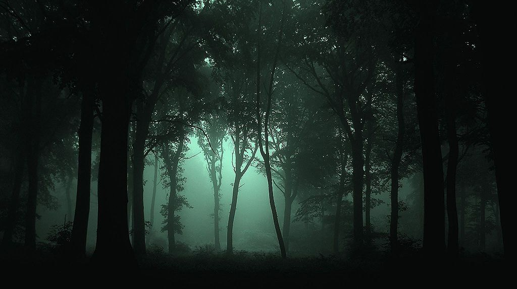 Woods at night   © JovanCormac / WikiCommons
