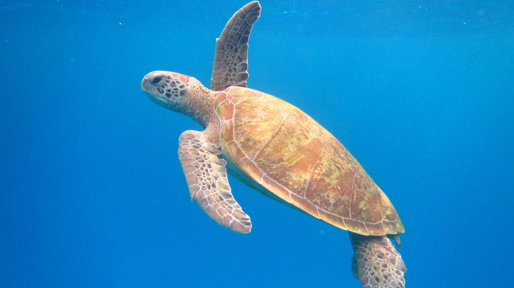 Snorkel with turtles on Lady Elliot Island