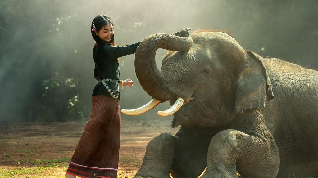 Elephants underwent cruel training, and many still do today