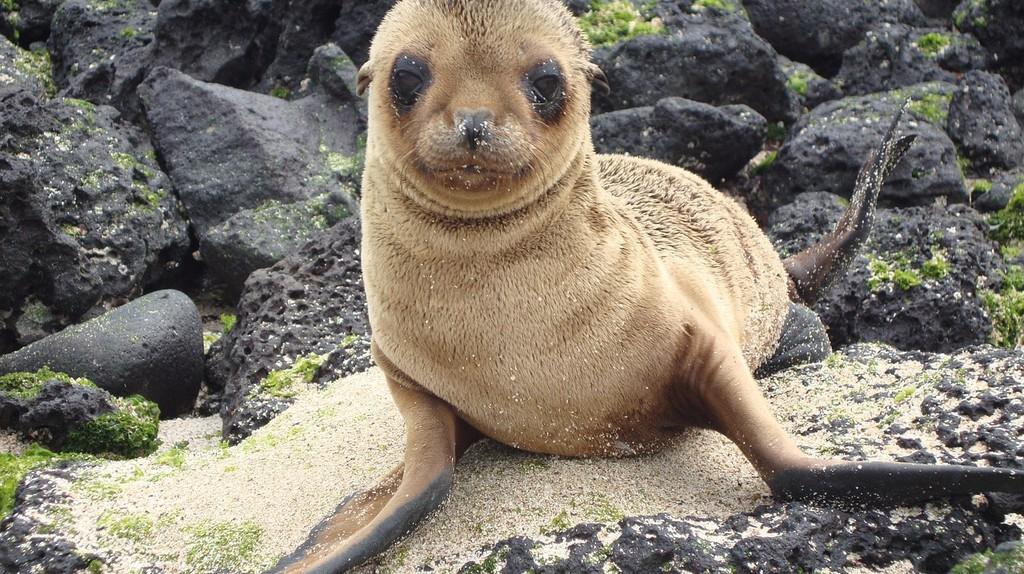 A cute little seal