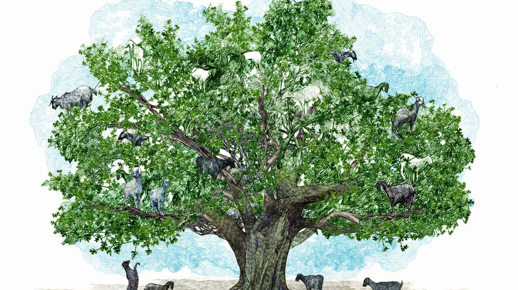 Argan, illustrated by Lucille Clerc