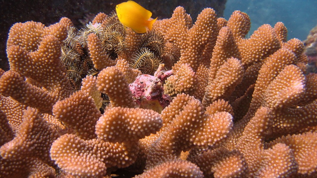 Thailand's underwater world
