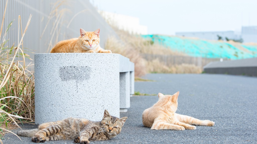 Cats abound in Japan