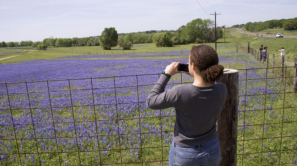 Texans love getting roadside shots of bluebonnets in the spring.