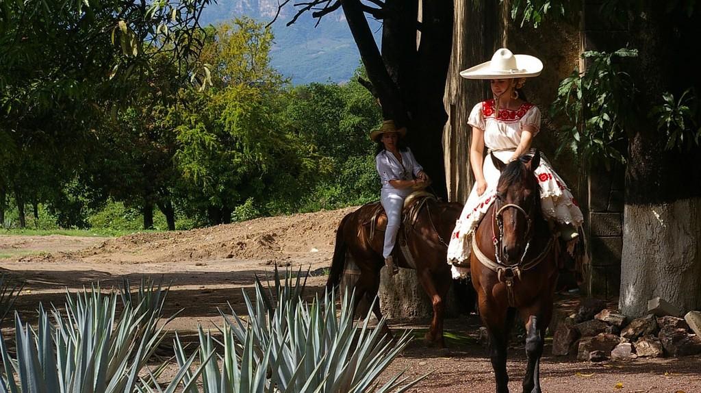 Horseriding in Tequila