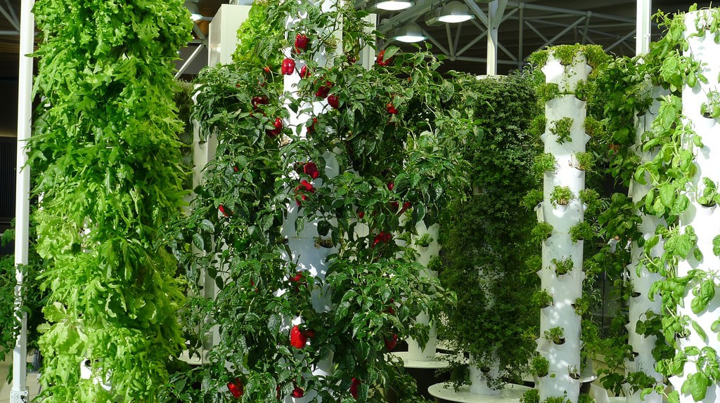 An example of vertical farming, Chicago O'Hare Airport