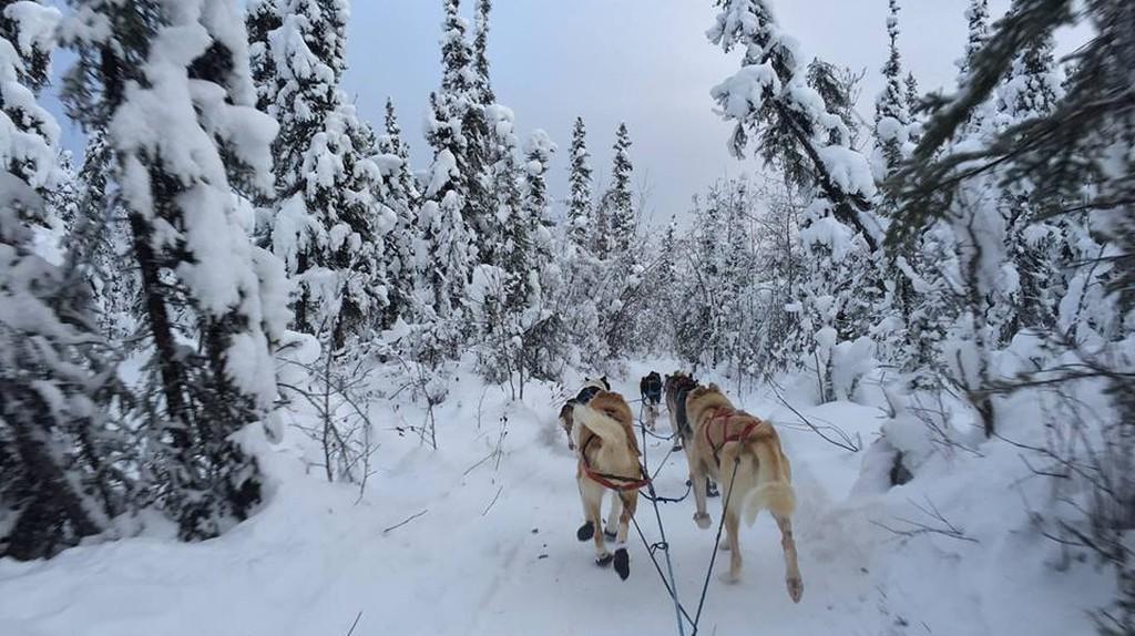 Dog sledding in Fairbanks, Alaska | © Bailey Berg