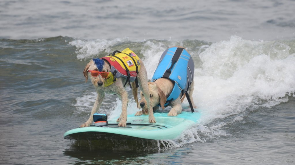 Tandem riding is one of the surf competition's categories