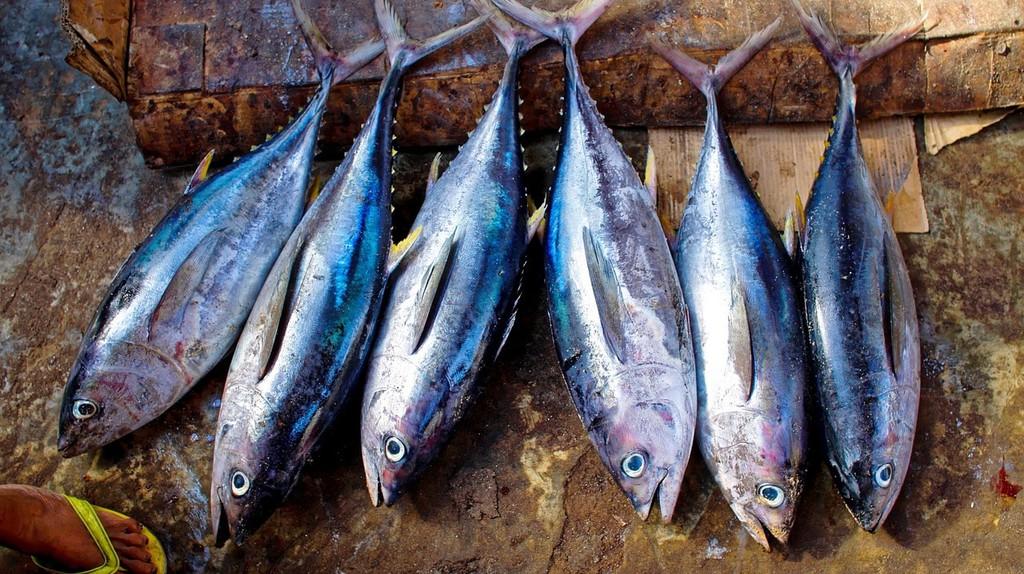Fresh tuna