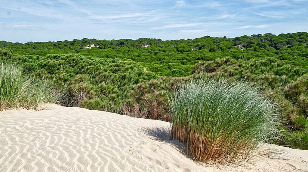 Southern Spain's Doñana natural park