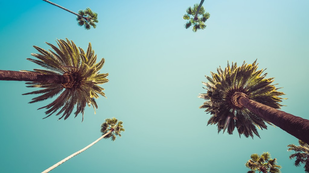 Palm Trees on Rodeo Drive, Beverly Hills
