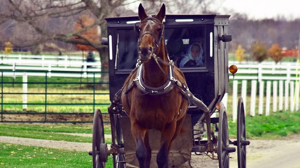 """A Michigan Man Is Offering His Own Amish """"Uber"""" Service"""