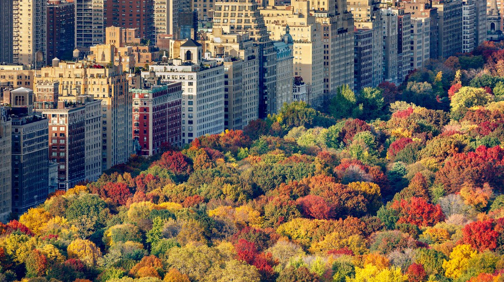 Aerial view of brilliant fall colors of Central Park West foliage in late afternoon. Upper West Side, Manhattan, New York City