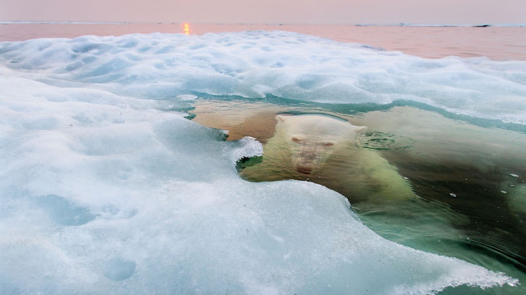 Paul Souders, 'The Ice Bear' photographed in Churchill, Manitoba, Canada
