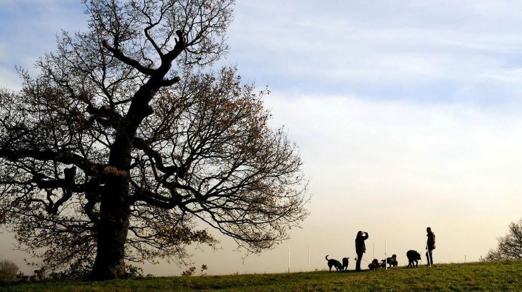 Walkers on Hampstead Heath, London