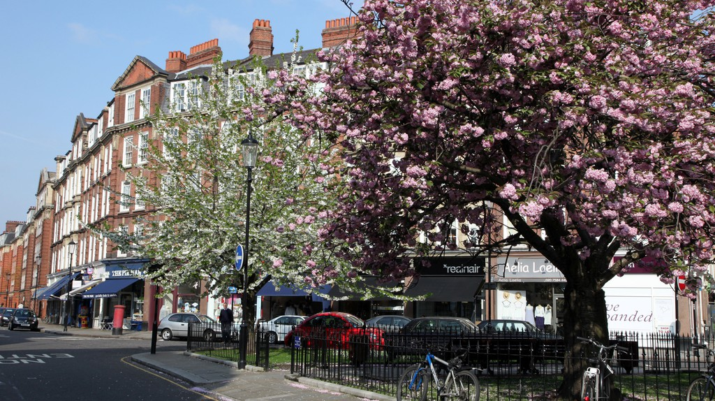 Leafy trees line a street in beautiful Chelsea, London