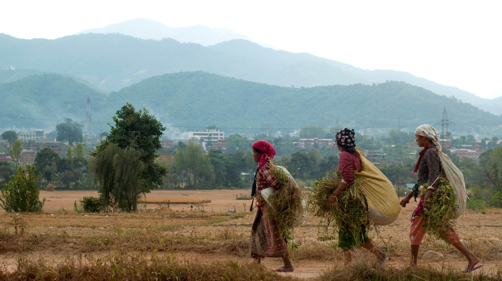 Farmers back to home with grass for livestock, Nepal