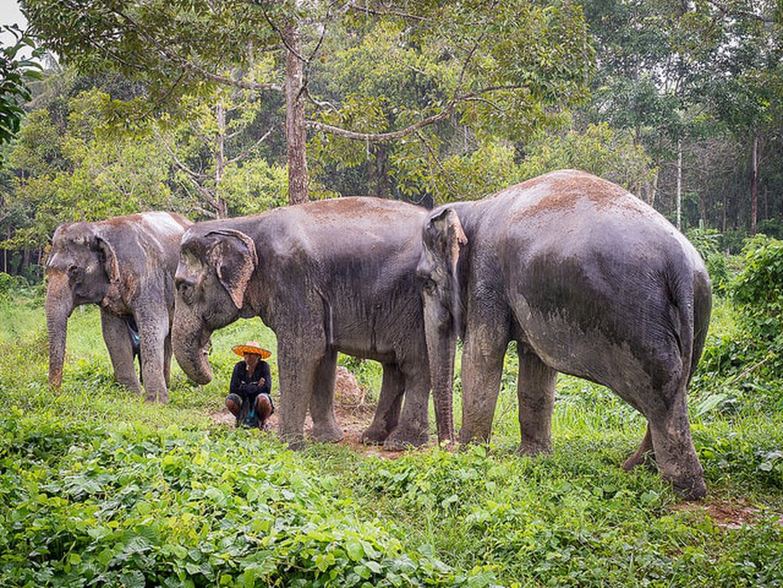Santuario de elefantes de Phuket