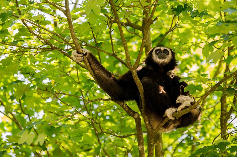 Proyecto de rehabilitación de Gibbon