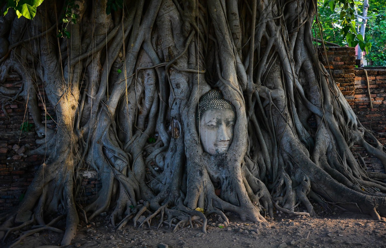 Kepala Buddha dari akar pohon