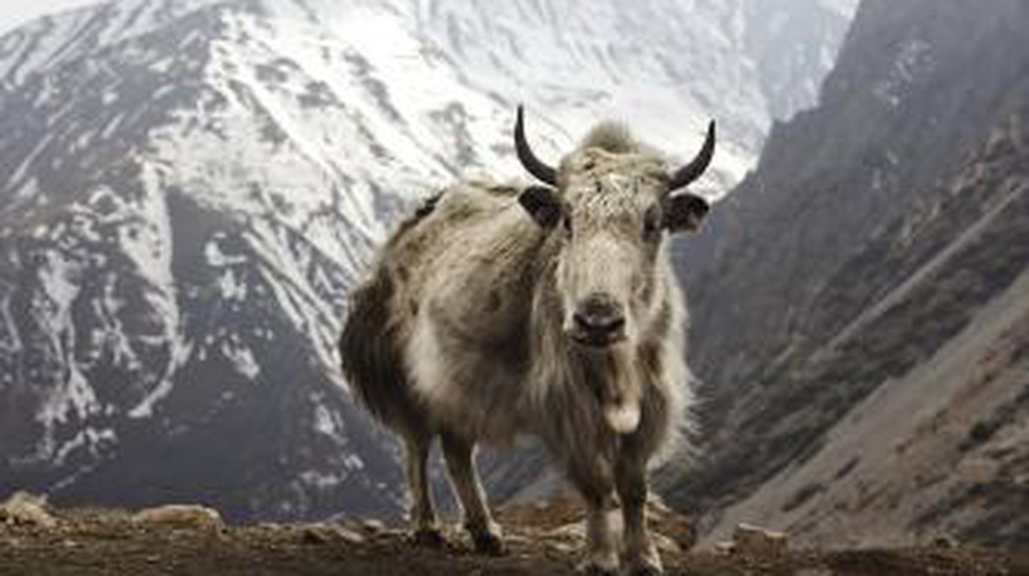 Land Of The Peaceful Thunder Dragon: The Best Literature About Bhutan