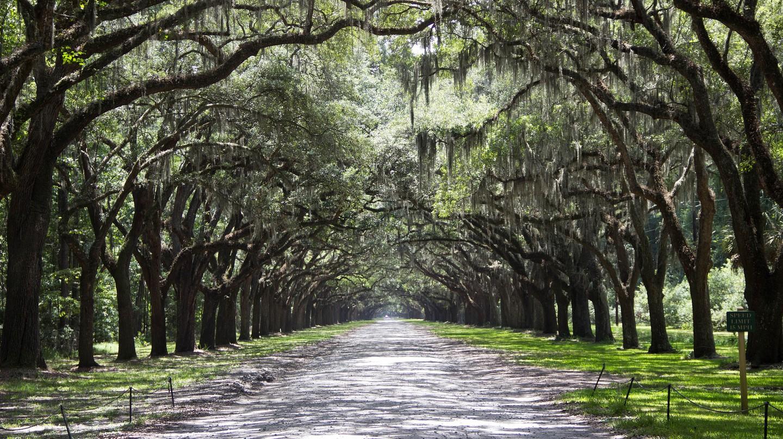 Savannah, Georgia   © zauberfrau_1962/Pixabay
